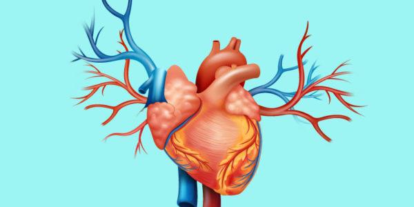 Liver Cancer Health Tips